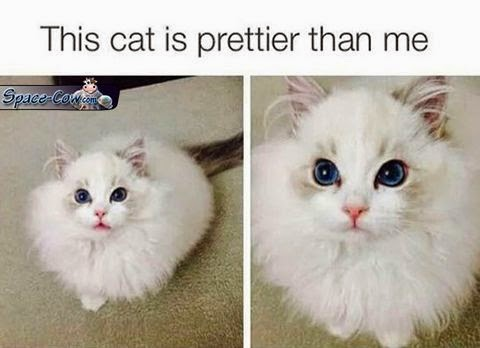 funny beautiful cat picture