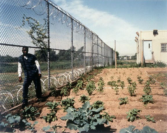 Prison garden for rehabilitation through wellbeing images frompo - Gardening in prisons plants and social rehabilitation ...