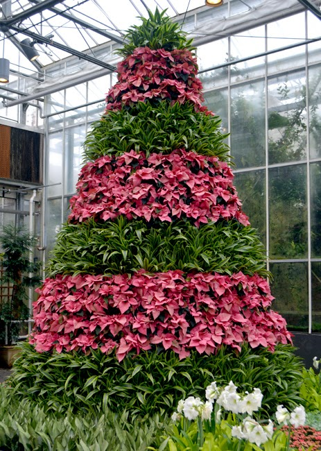 Poinsettia Tree at the Atlanta Botanical Garden