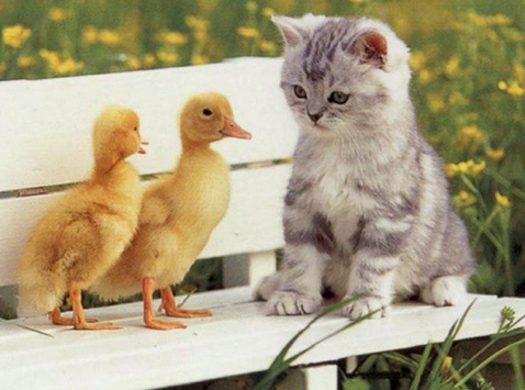 Foto Kucing Lucu Imut dan Menggemaskan 26