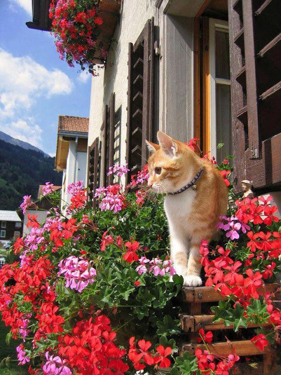 Привет, я - кот!