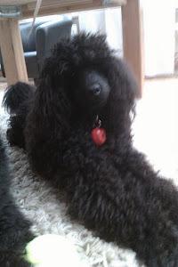 Vår älskade hundvalp-Fridas baby!