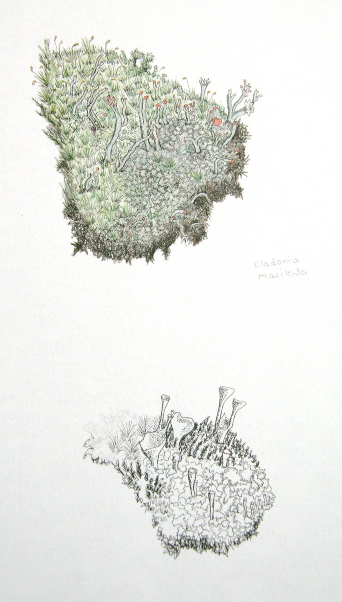 Moss On Tree Drawing Galleryhipcom The Hippest Galleries