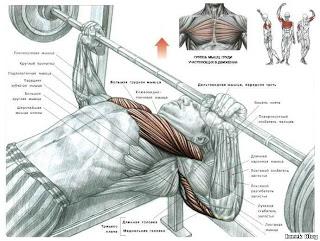 %25D0%25B3%25D1%2580%25D1%2583%25D0%25B4%25D1%258C Как правильно качаться? упражнения на грудные мышцы