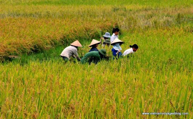 Visite du village Tay à Lao Cai - Photo An Bui
