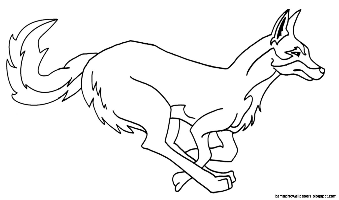 coyote coloring page - coyote drawing kids amazing wallpapers