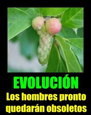 Evolución de penes