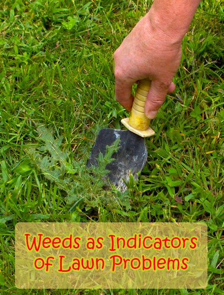 Weeds as Indicators of Lawn Problems