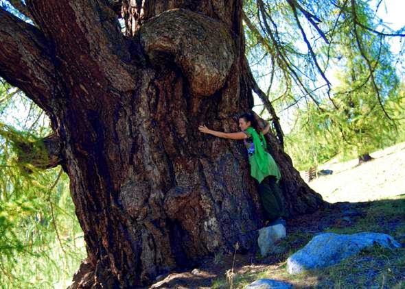 arbre-mon-frere
