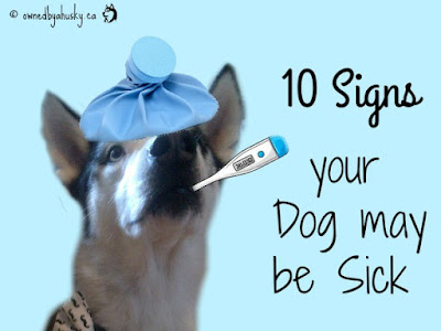 10 Signs Your Dog May Be Sick