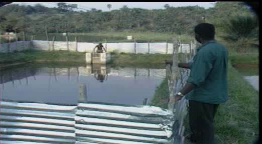 Practical Catfish Farming In Nigeria: Manual/Free Video