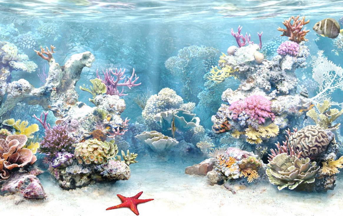 Selma Horn: coral reef