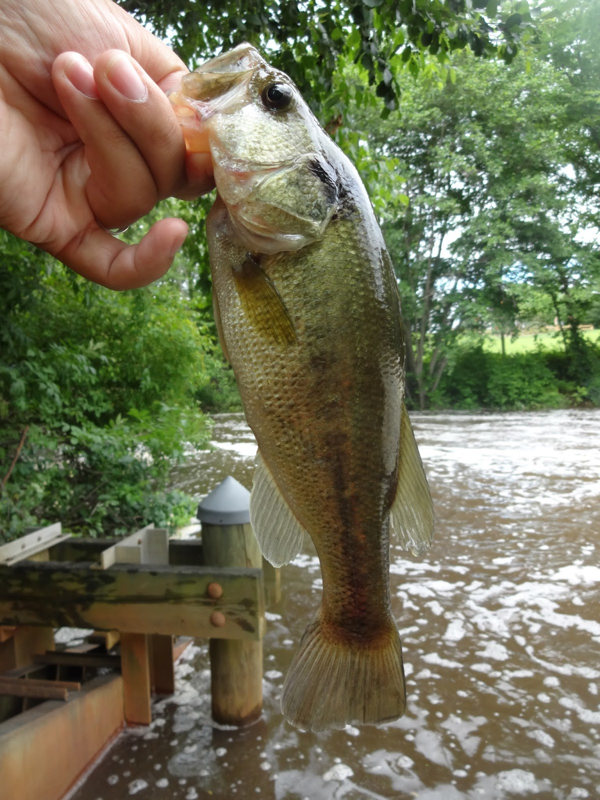 Extreme Philly Fishing: June Fishing Sessions: 06/28 - Multi-Species ...
