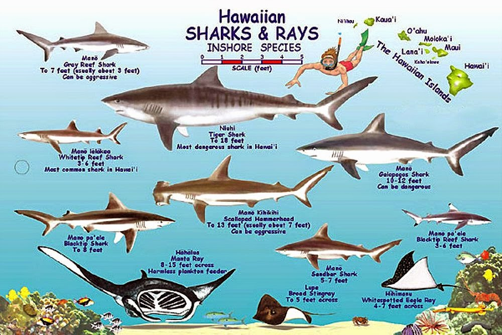 an overview of the characteristics of different shark species Same species or the same common name for different species can characteristics of whitetip reef shark pajama catshark sevengill shark what's in a name.