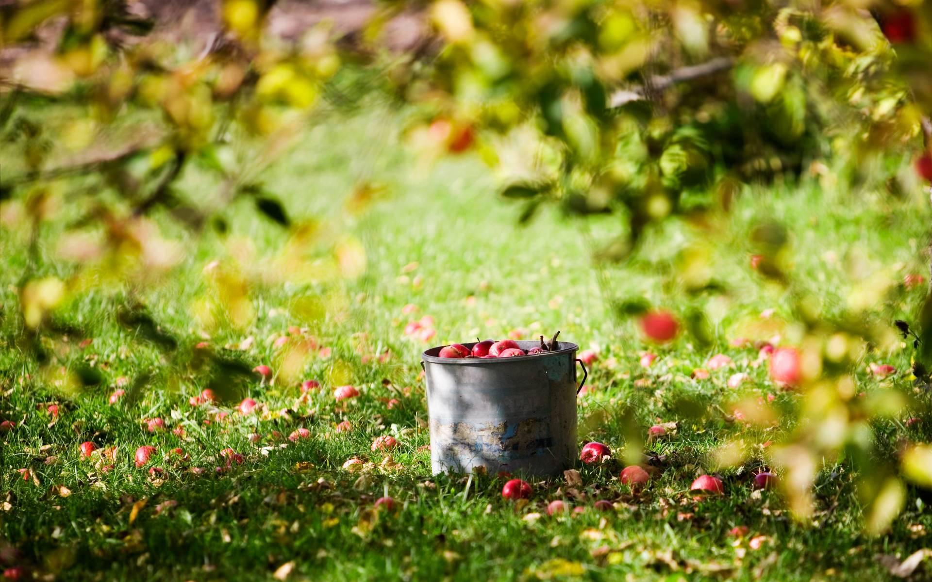http://3.bp.blogspot.com/-jMRHYT_BrEQ/T_gAvkNIDnI/AAAAAAAAJ5k/sMQjwG8Yx0w/s1920/Fruits-under-tree-wallpaper.jpg