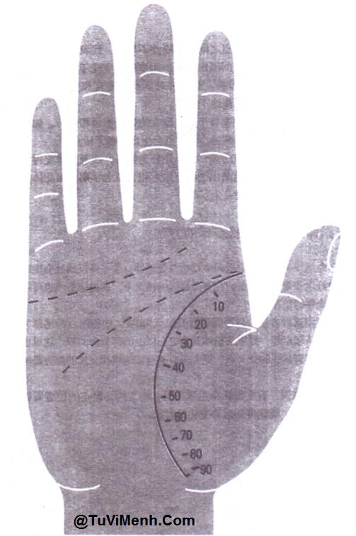 [Tướng Tay] - Dự đoán thời kỳ của đời người bằng chỉ tay