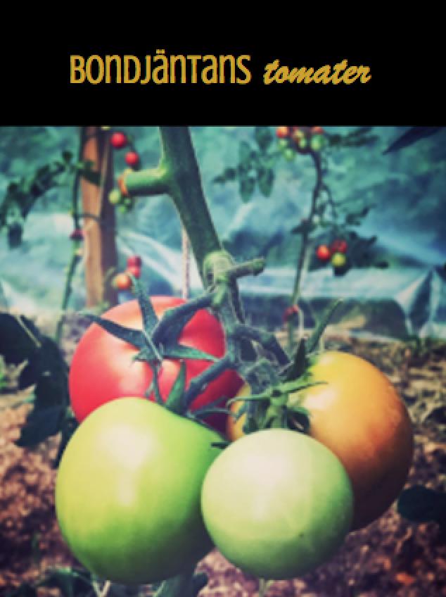 🌟 Ny tomatsida! 🌟
