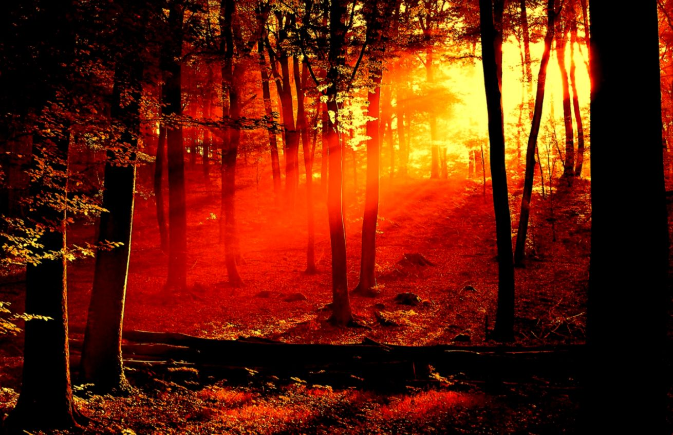 Forest Sunrise Wallpaper Landscape Nature Wallpapers in jpg format