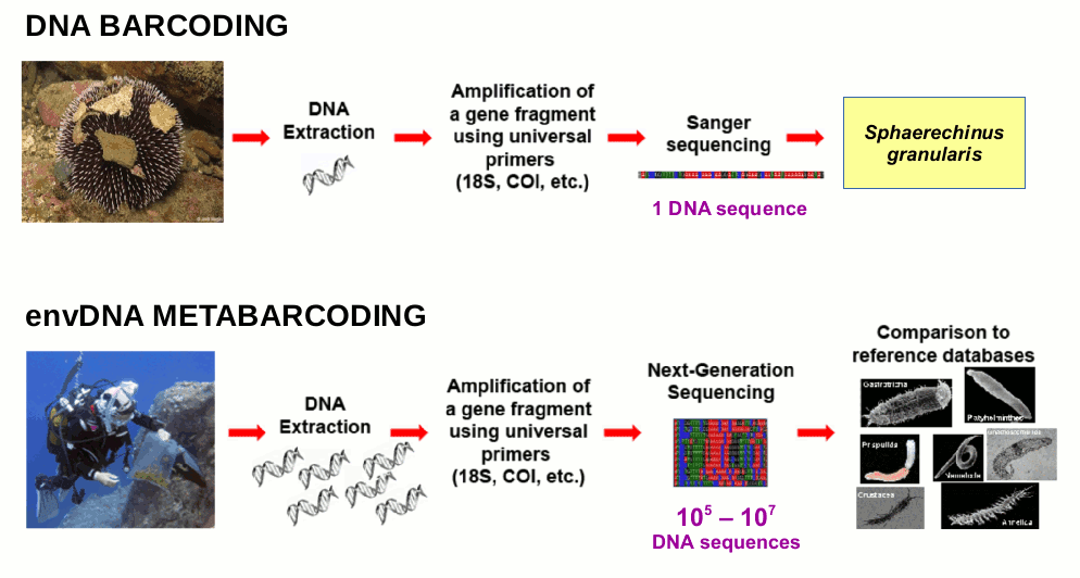 thesis on dna barcoding Find dissertations online yale dna barcoding thesis custom writing for tattoos interest in public service essay.