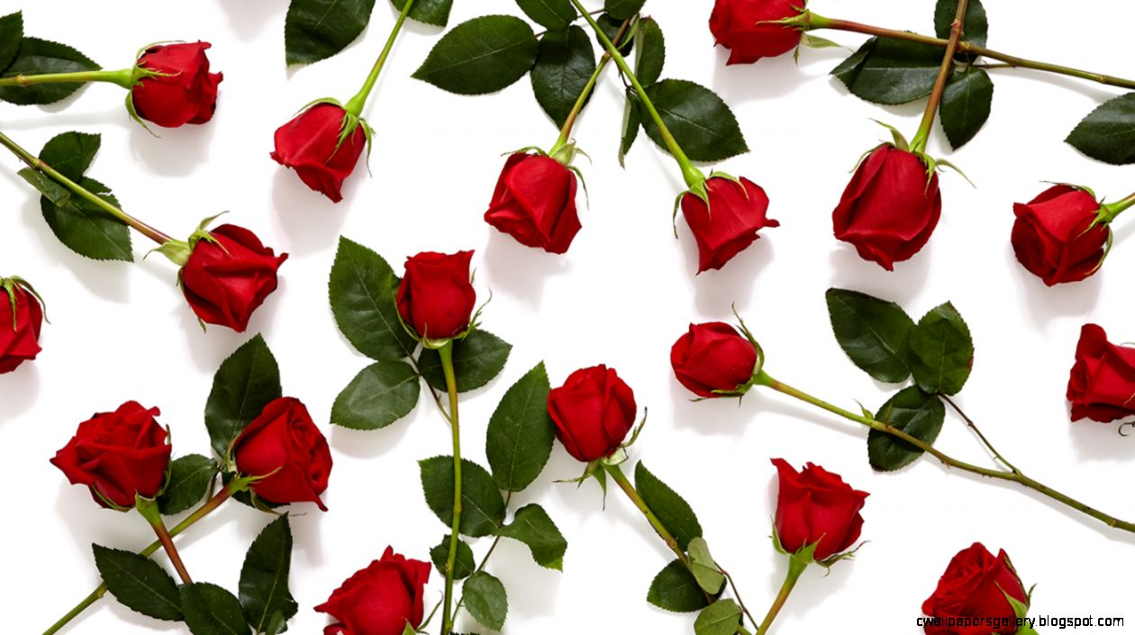 History and Meaning Behind Red Roses   ProFlowers Blog