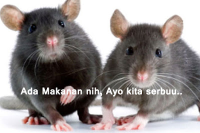 cara-mengusir-tikus