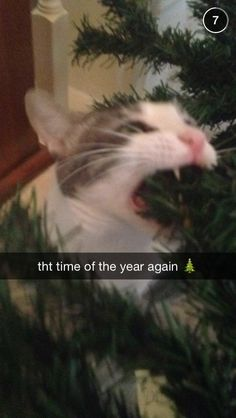 cat christmas tree, cat eating christmas tree, cat christmas problems, funny snapchat