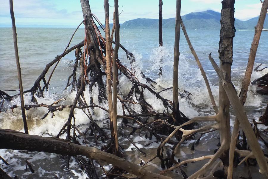 retreating mangrove coastline