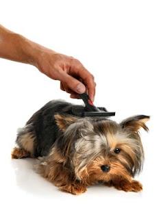How To Brush Your Labrador Retriever