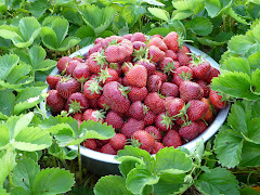 Sun Ripened Strawberries