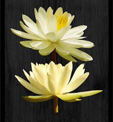 Soul Lotus