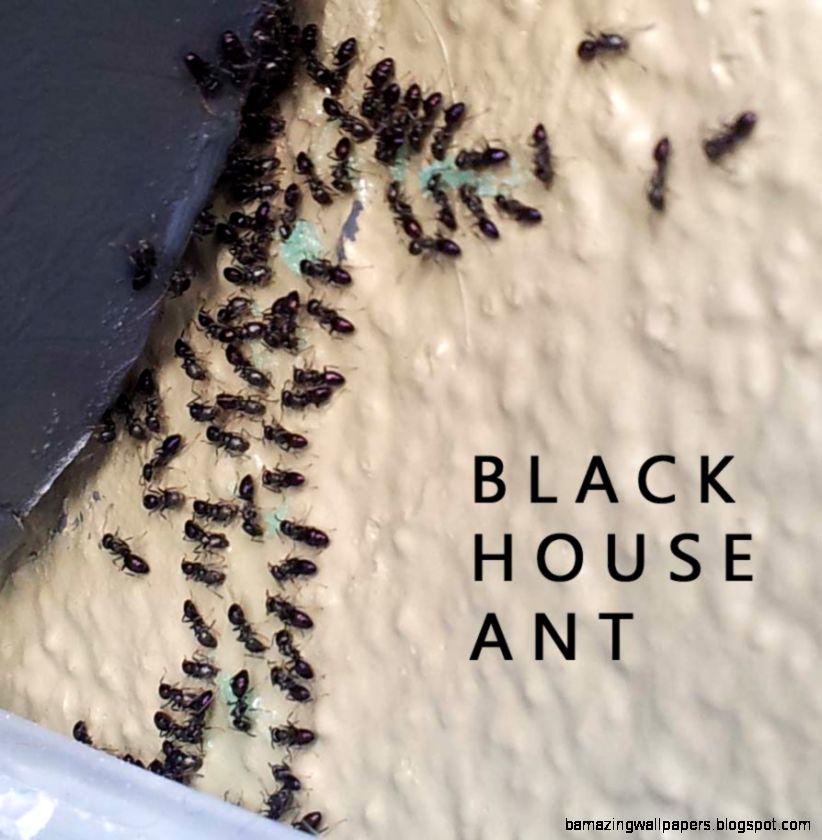 Auckland Pest Control ACES Pest Control  0800 223 728