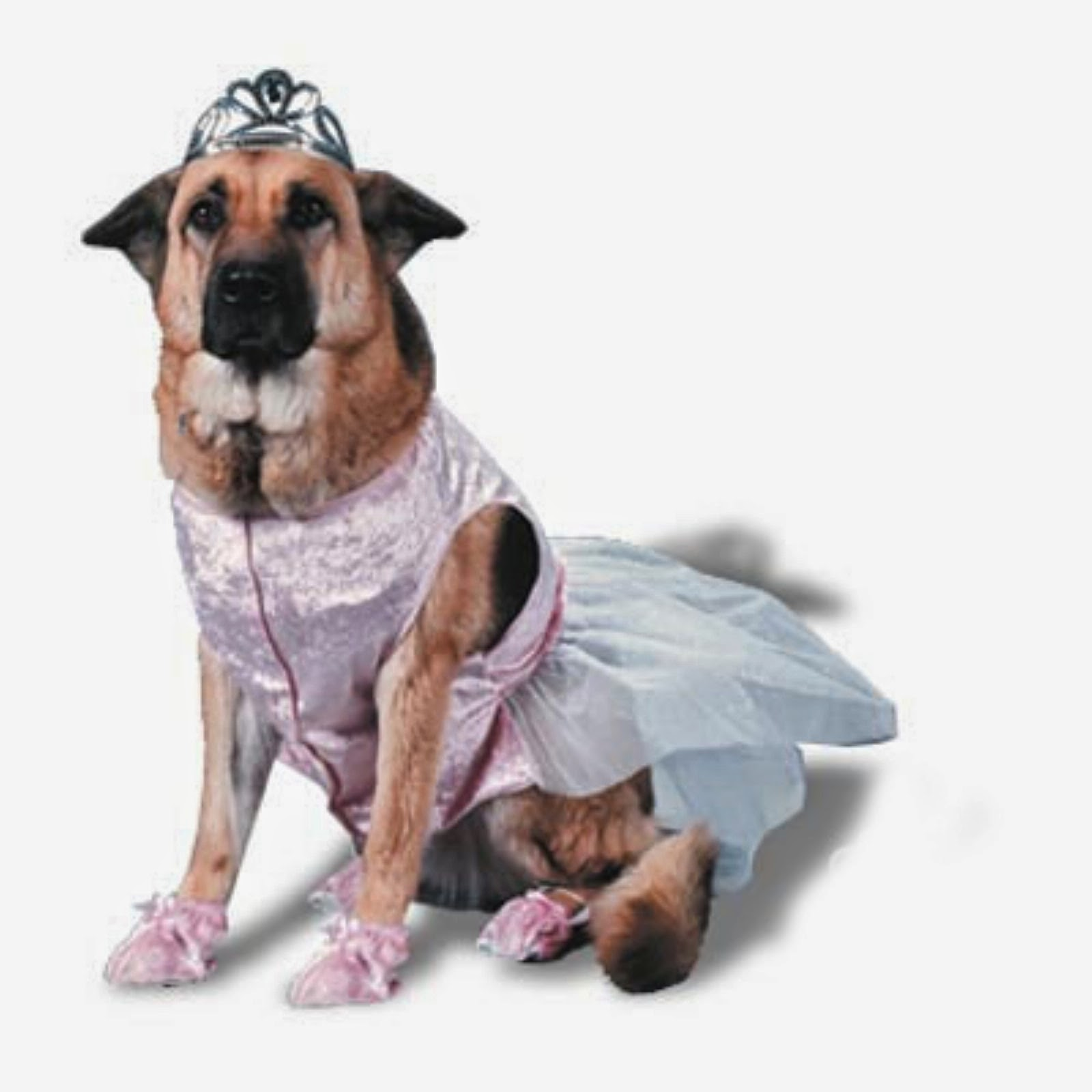 big dog halloween costumes rules jungle large dog costumes