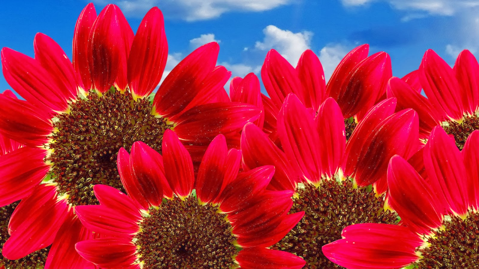 http://www.funmag.org/pictures-mag/flowers/beautiful-flowers-wallpapres/