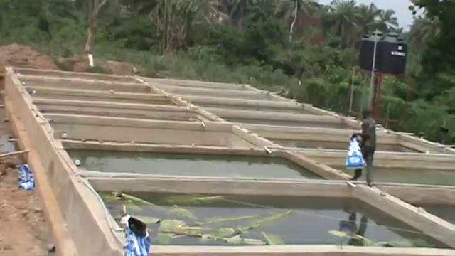 Subconscious mind training for Concrete fish pond design