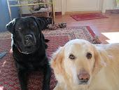 Stella og Cita