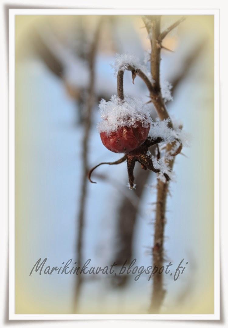Talvi!