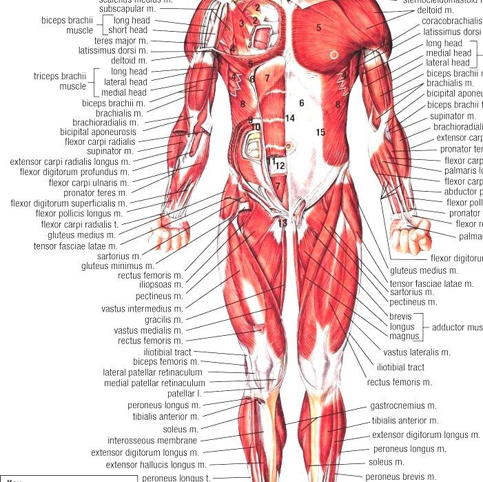 Human Body Structure Of Human Body