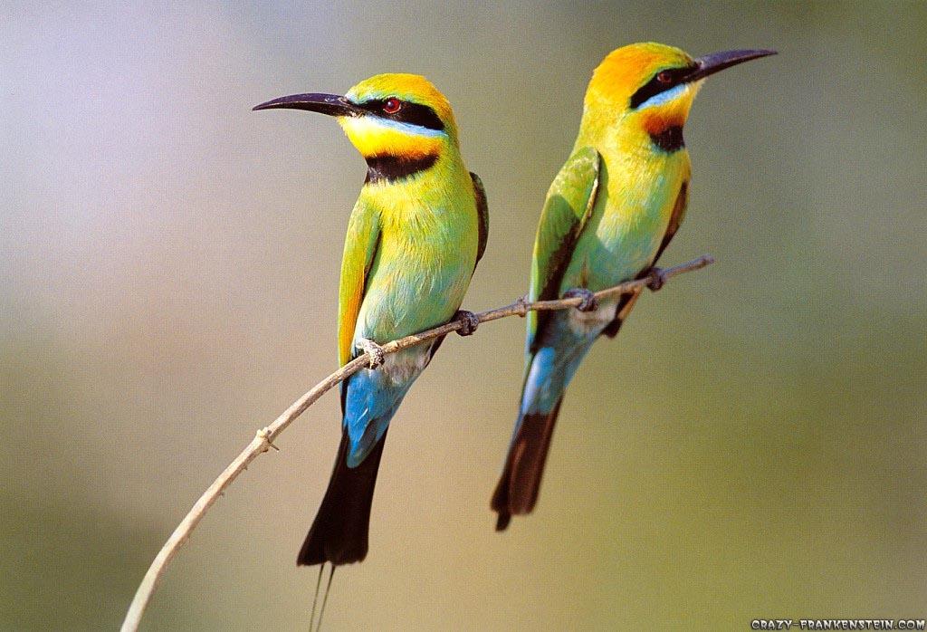 yellow bird on flower branch wallpaper | yellow bird on flower