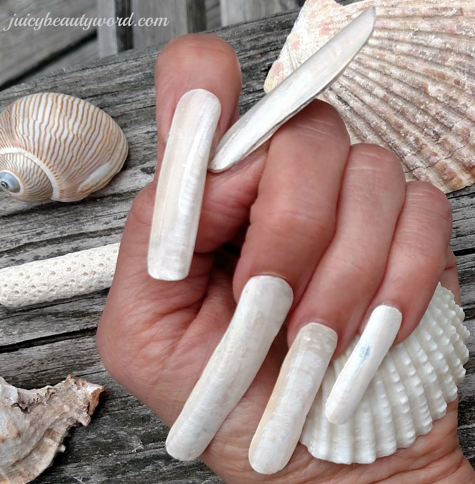 SEA SHELL NAILS