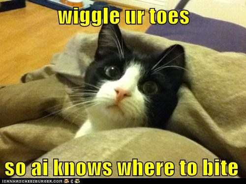 - funny-pictures-wiggle-ur-toes-so-ai-knows-where-to-bite