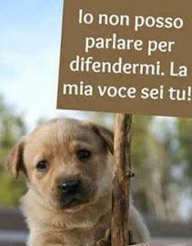 <b>AMARE GLI ANIMALI, non significa voler bene al cagnolino di casa e basta</b>.
