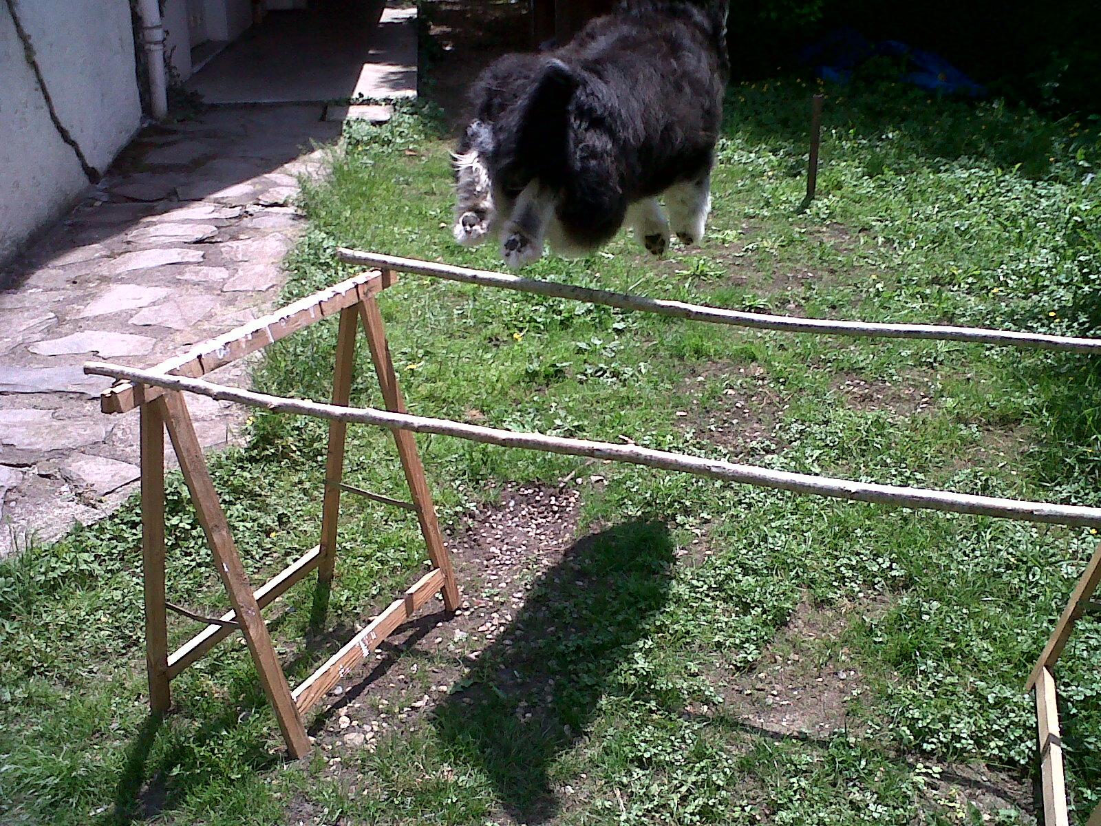 Agility au jardin ma chienne l 39 preuve audrey for Agility au jardin