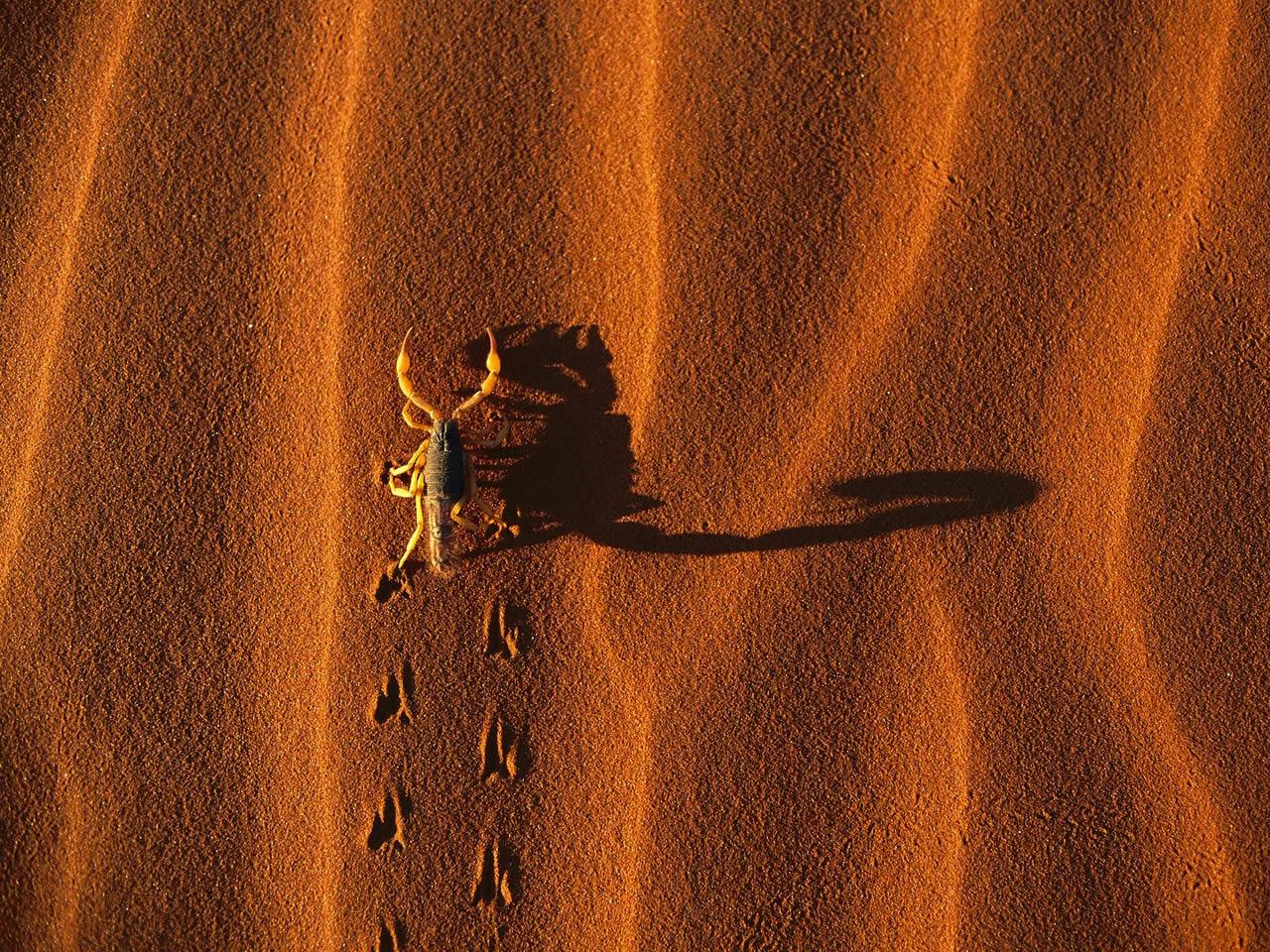 http://3.bp.blogspot.com/-jRAc8k6LXTs/TeEDb1FMkEI/AAAAAAAAA4Q/dYaAx6of3k0/s1600/shadow-casting-scorpion-namib-naukluft-national-park-namibia.jpg