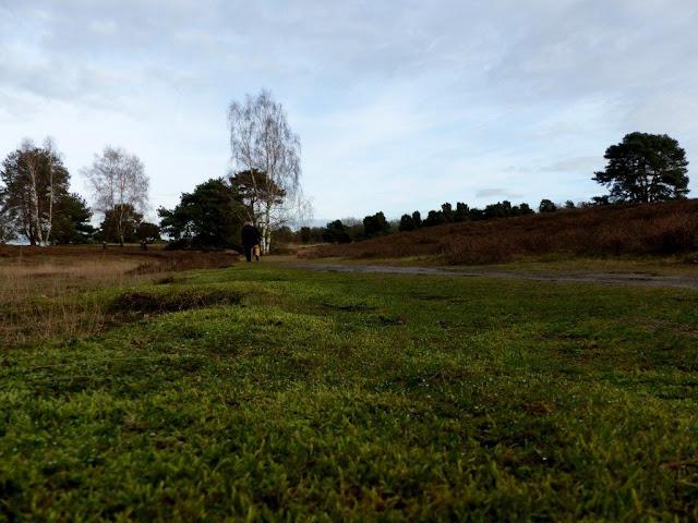 Westruper Heide Haard Naturpark Hohe Mark Kreis Recklinghausen Ruhrgebiet Wandern Hunderunde
