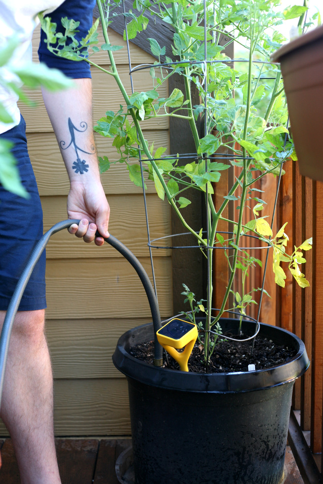 Husband has enjoyed the tech   hands on elements of the sensor and the  garden is more his creation than mine  He has more gardening experience  than I do and. Beginning gardening  plus tech  The Edyn garden sensor   Create