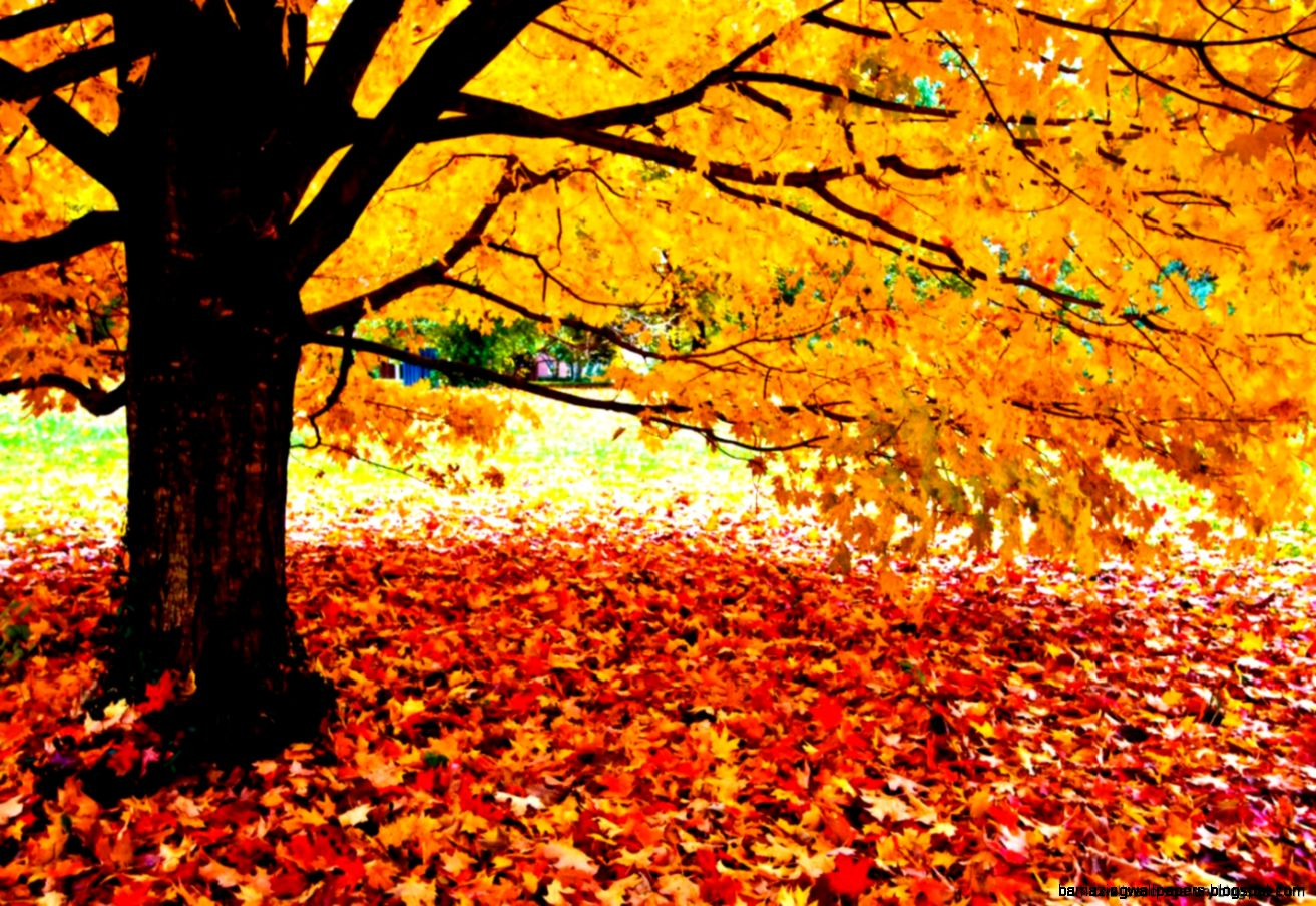 Fall Leaves Facebook Covers  Wallpapers Gallery