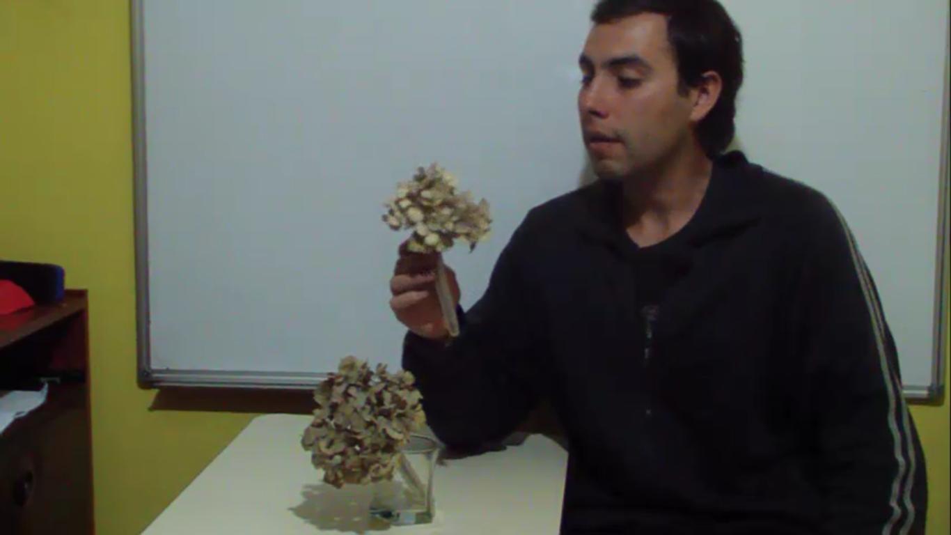 Planeta agron mico c mo secar flores de hortensia sin - Como secar hortensias ...