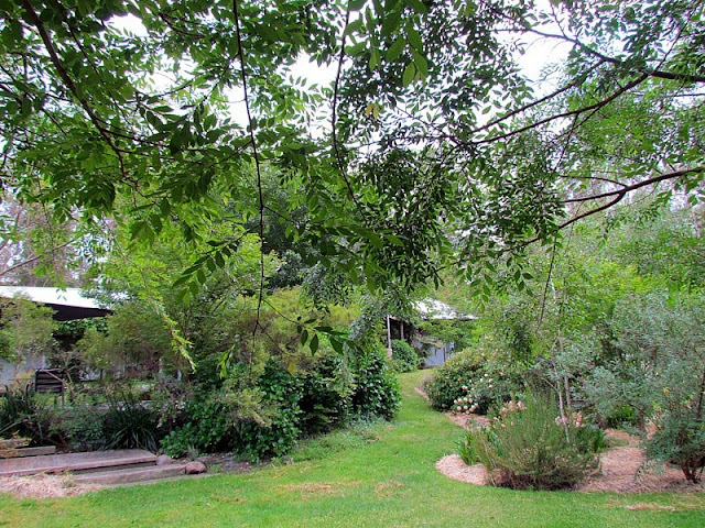 Suziqu 39 S Threadworks A Peek Into Our Rambling Rose Garden