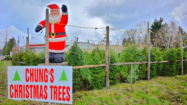 Chung's Christmas Trees | Ladner, BC