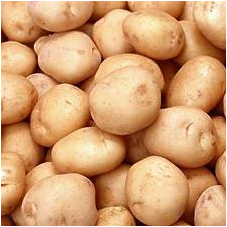 KENTANG (Solanum tuberosum L.) Part 1